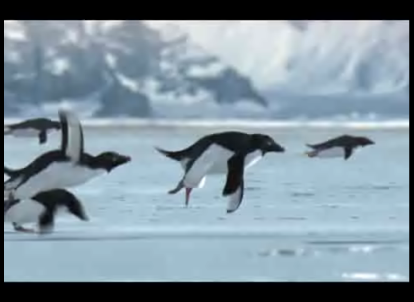 fliegende pinguine